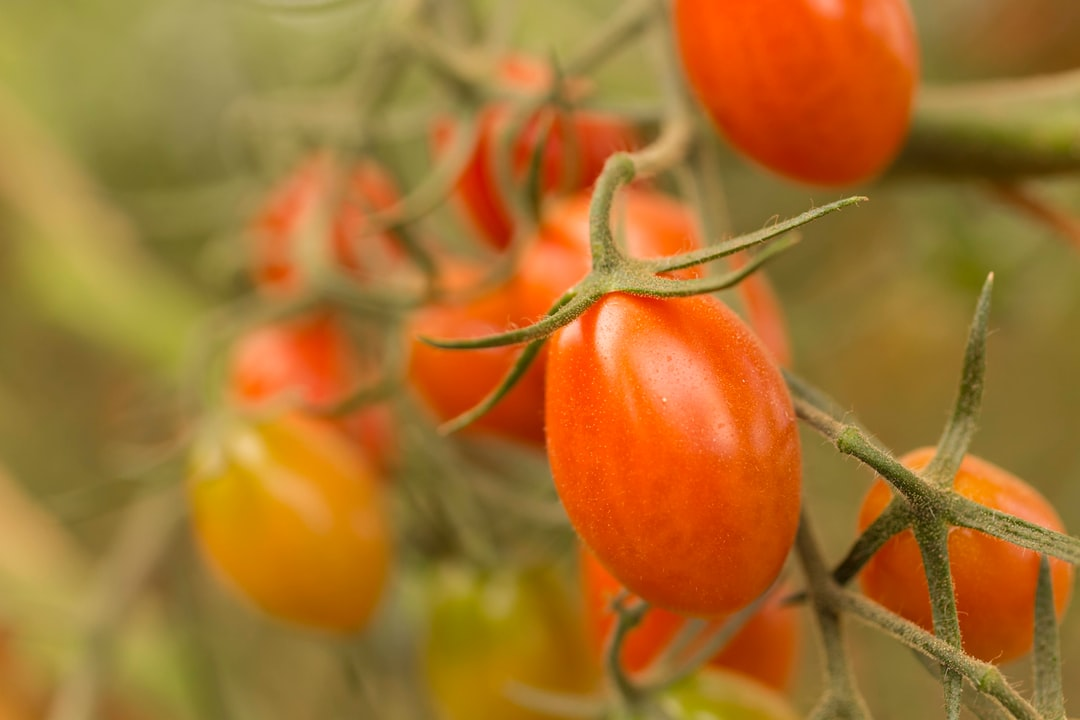 A close up of a tomato